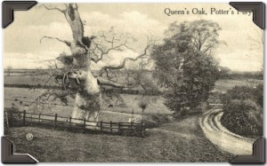 Queen_s_OakTree_tabs_500